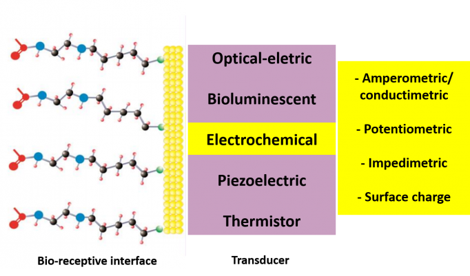 Possible types of transducers in a biosensor and the four different types for those devices based on electrochemical transducer concepts