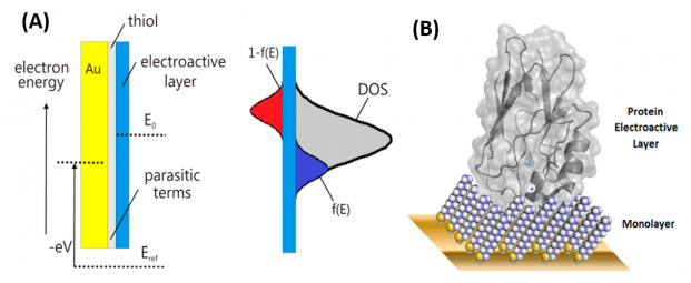 Schematic representation of a modified electrode interface composed of dielectric and redox-active regions